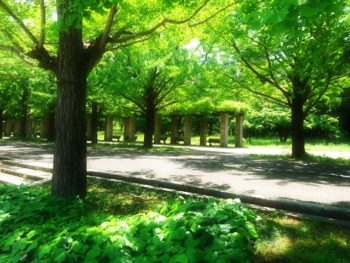 かずき造園